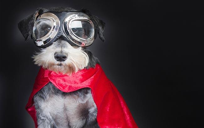 Heroic Pets