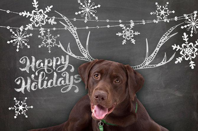 Happy Holidays from BOE